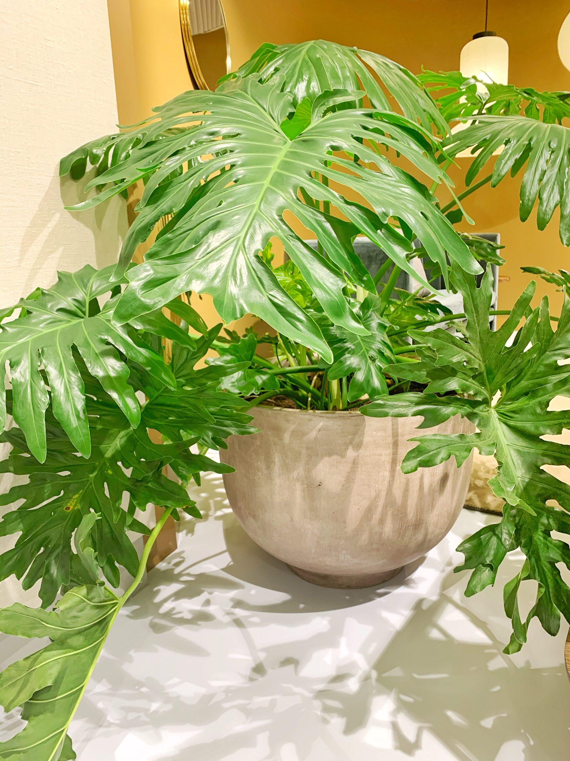 Grønne planter er godt for indeklimaet og giver dig på en gang både liv på kontoret og noget roligt og behageligt at kigge på.
